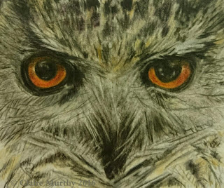 british bird illustration owl