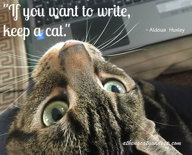 writers and cats