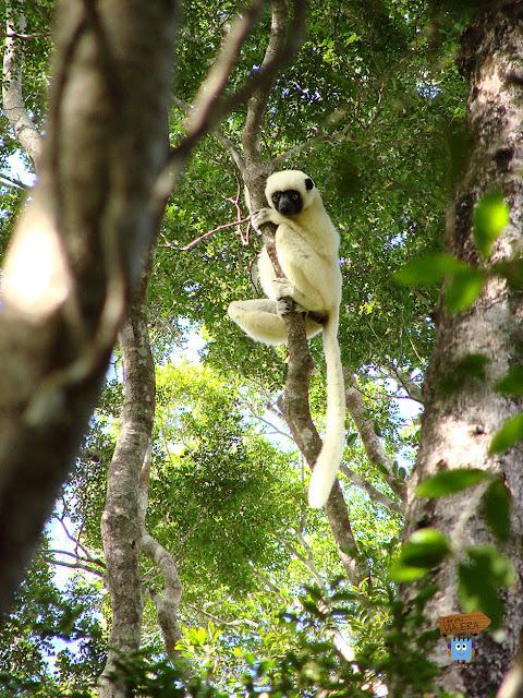 Madagascar: parque Nacional Tsingy de Bemaraha
