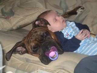 animal  Cães e Crianças Cuidasdos Importantes