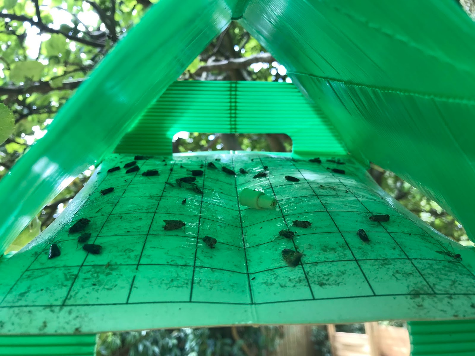 Codling Moth Pheromone Trap Garden Design Ideas