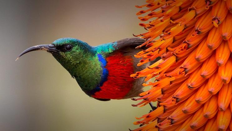 Mengapa Beberapa Burung Memiliki Paruh Bengkok?