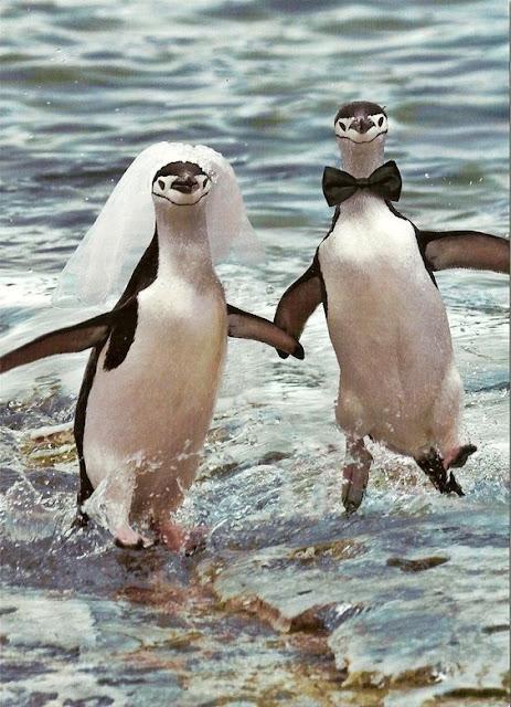 Funny Penguin Wedding Joke Picture