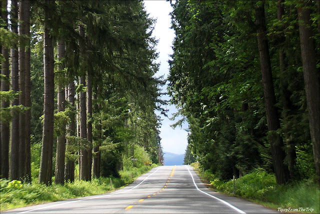 The scenic route to Mt. Rainier National Park.