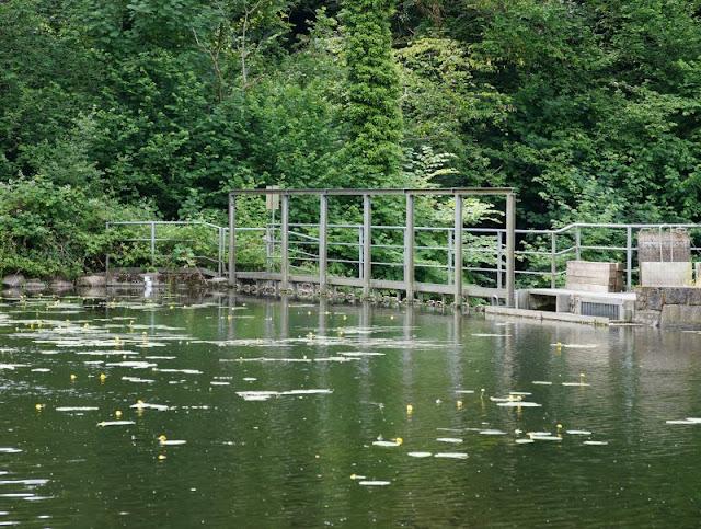 Ein Familien-Ausflug zu den Fischen: Die Fischtreppe an der Schwentine. Im angestauten Teich schwimmen auch Karpfen!