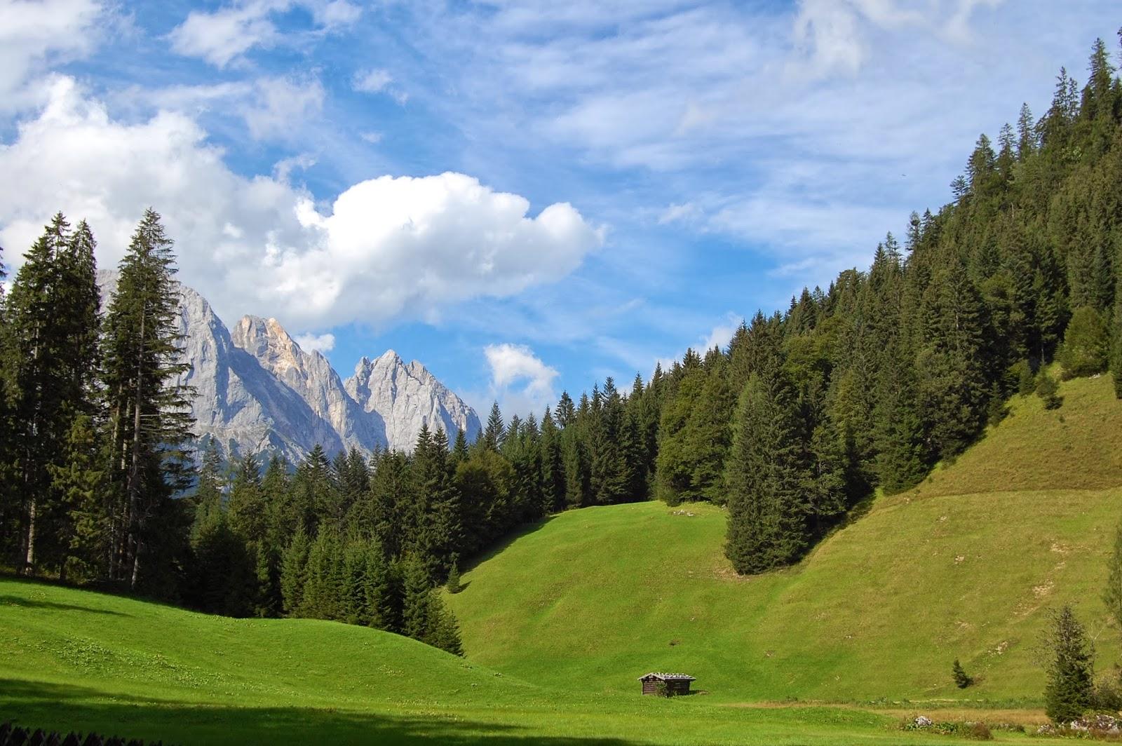 Resultado de imagen de clima de montaña vegetacion