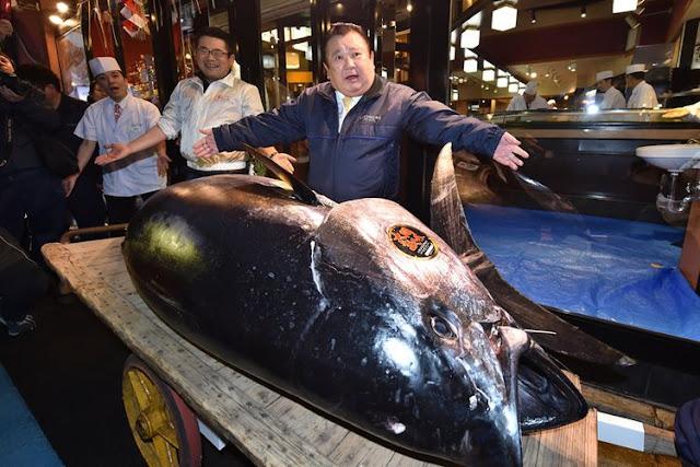 Ikan Tuna di Jepang Terjual Rp 43 Miliar, Cetak Rekor Baru dalam Lelang