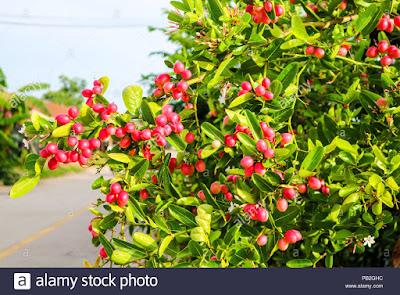 كيفية تنشيط المبايض طبيعيا بالأعشاب الطبيعية أو بالأدوية؟