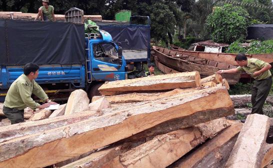 Quảng Ngãi Vận chuyển gỗ trái phép bị phạt 45 triệu đồng