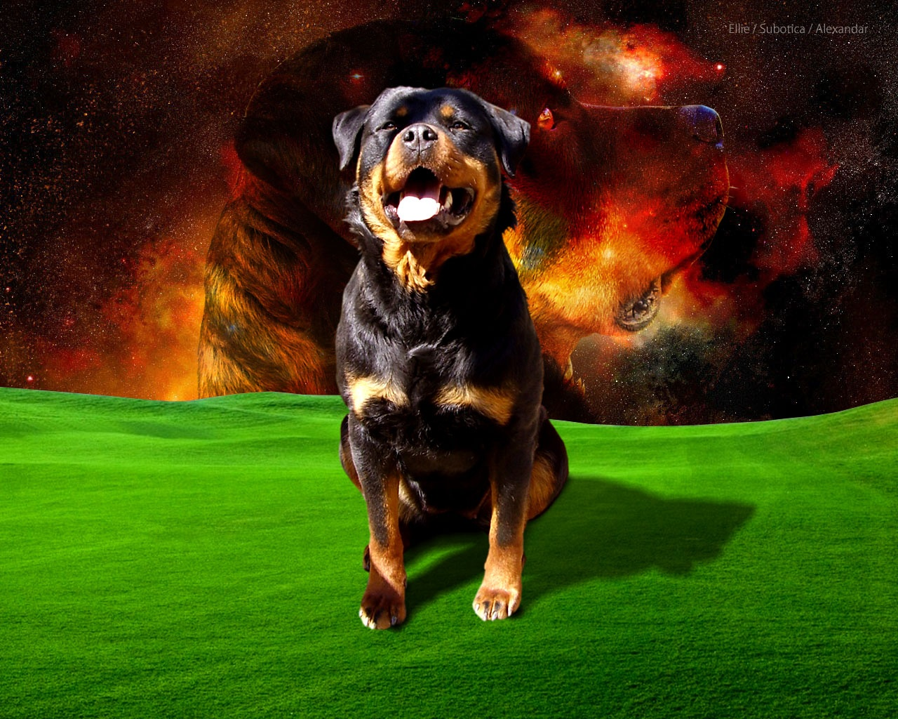 Cool Dogs HD Wallpapers – wallpaper202
