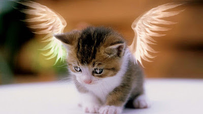 billu-with-angle-wings-sosweety-images