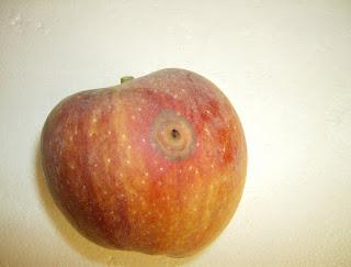 fruta con gusano