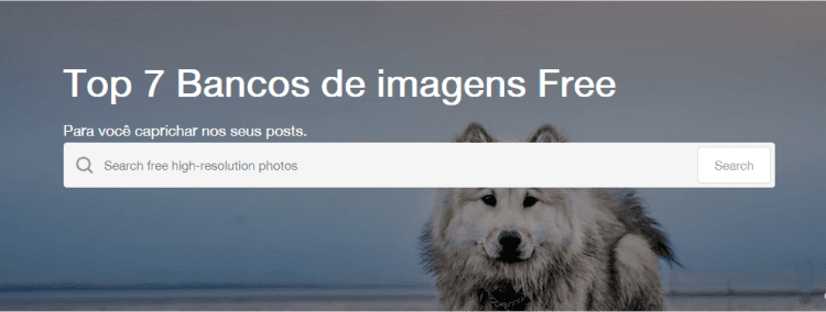Top 7 bancos de imagem free