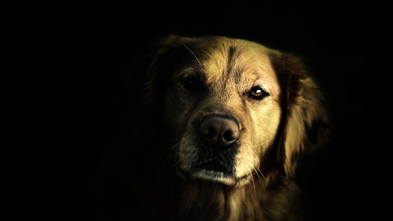 O σκύλος σου έχει την έκτη αίσθηση!