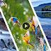 Amazing Nature HD Wallpaper Download