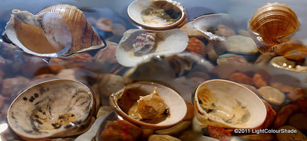 Seashells in the water