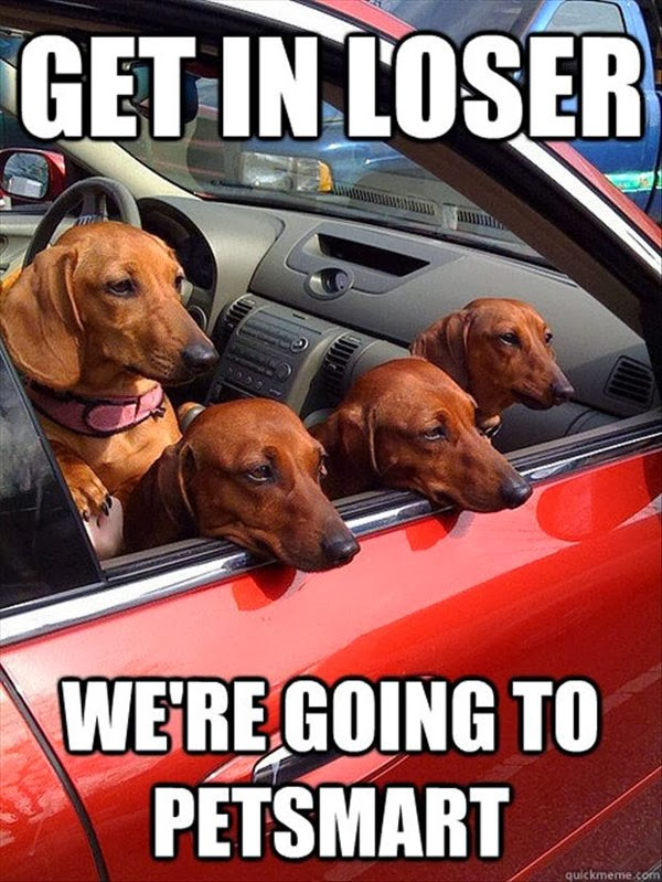 funny dogs looking out of car side window
