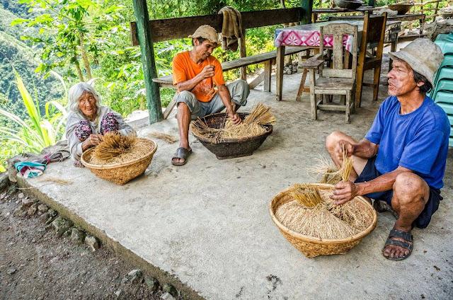 8th Wonder of the World Batad Rice Terraces Ifugao Cordillera Administrative Region Philippines Batad Rice Terraces Local Folk Farmer The Oldest Woman Elder of Batad and her sons