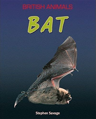 Bat book | Bat by Stephen Savage