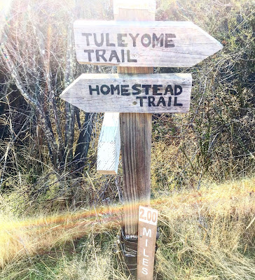 Tuleyome / Homestead trail junction