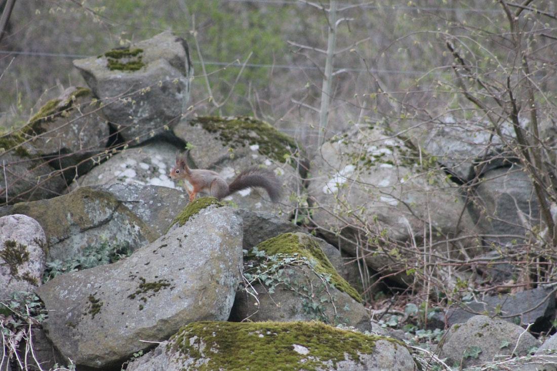 Lo scoiattolo nel mio giardino
