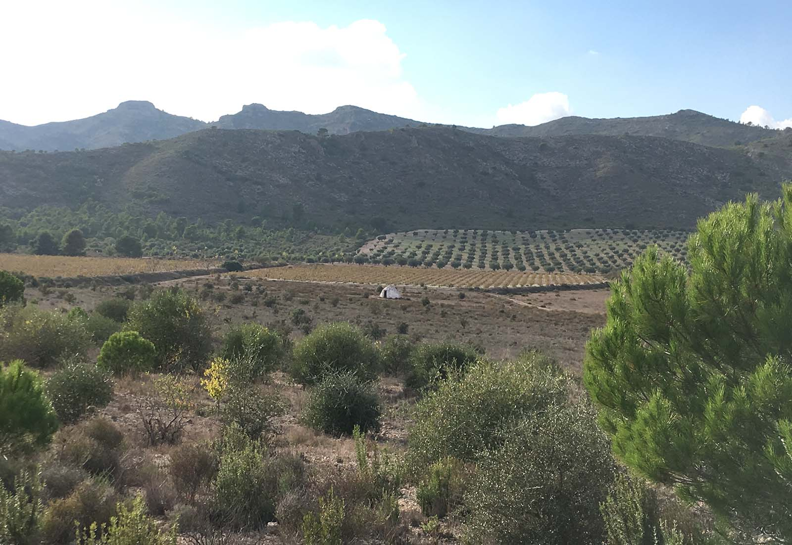 Refugio de pastores y labradores típico de la Mancha. Yecla, 2018