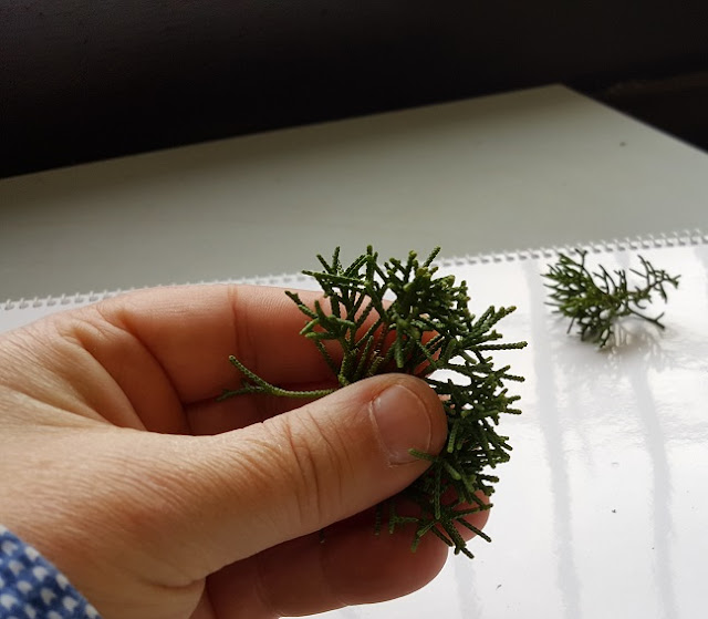 rama juniperus, limpieza y aclarado