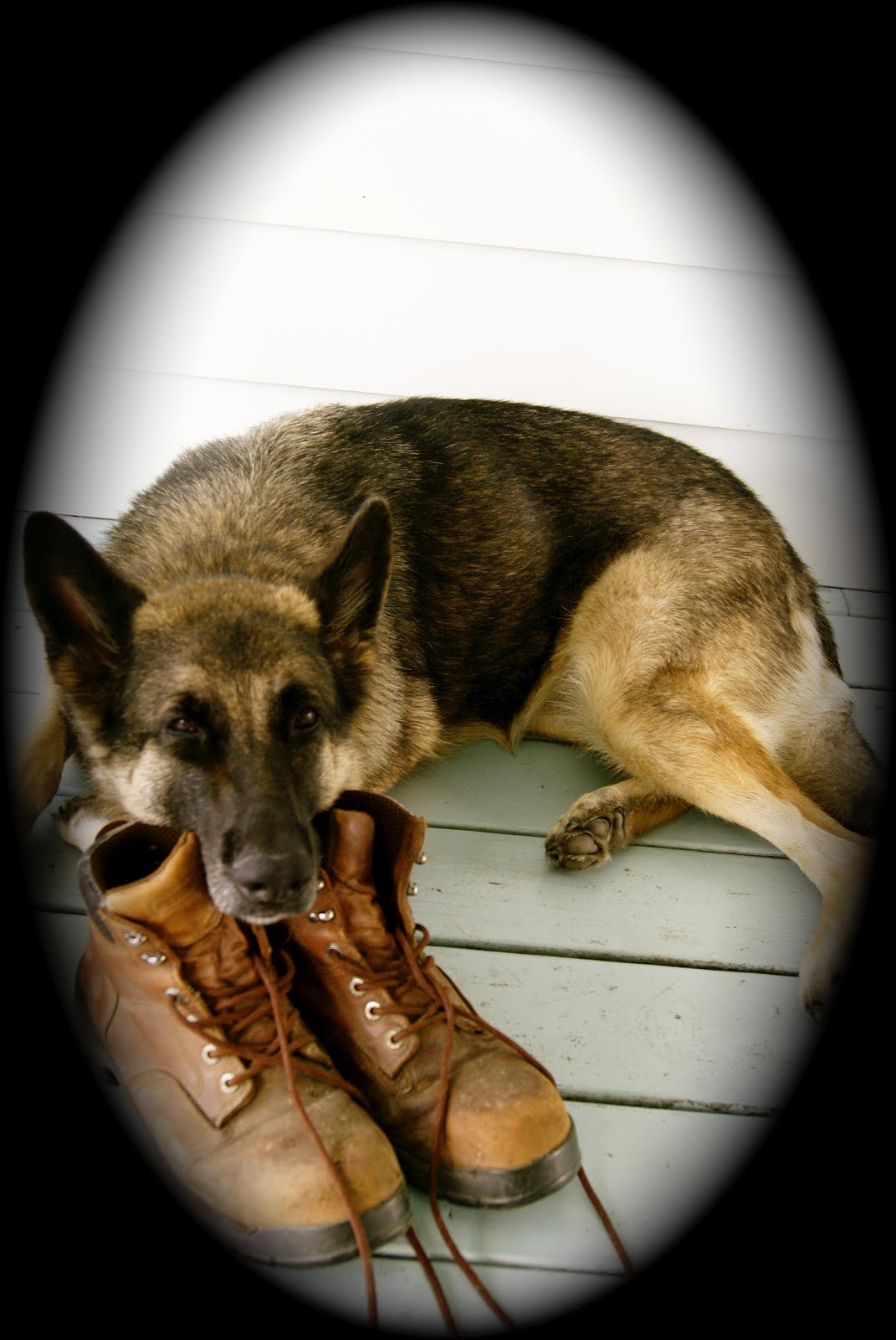 ~Lucy, the best watch dog ever~
