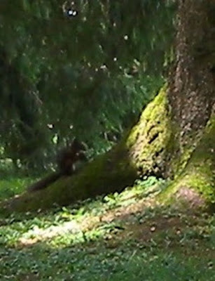 squirrel sitting by the tree with a nut