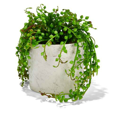 Kmart Marble Look Pot with Plant | Cate Renée