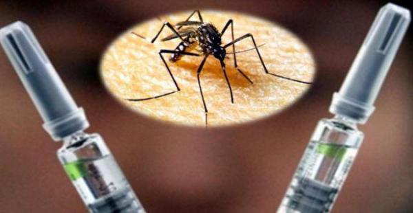 El mundo entero celebra esta noticia: Descubren cura para el Dengue