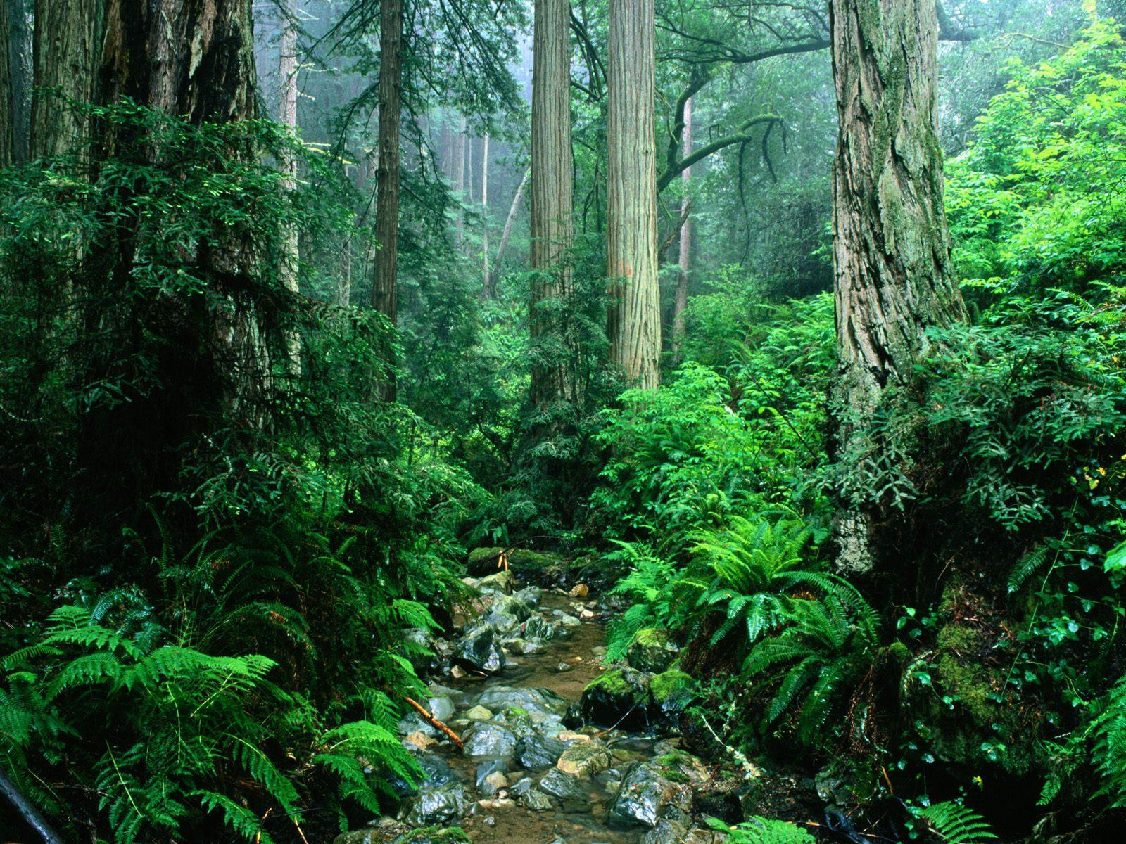 Tropical Rainforest - Dreams Destinations