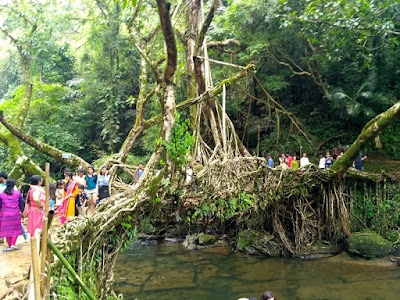 Living_Root_Bridge