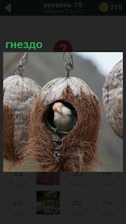 Гнездо висит на крючке высоко и в нем находится птица