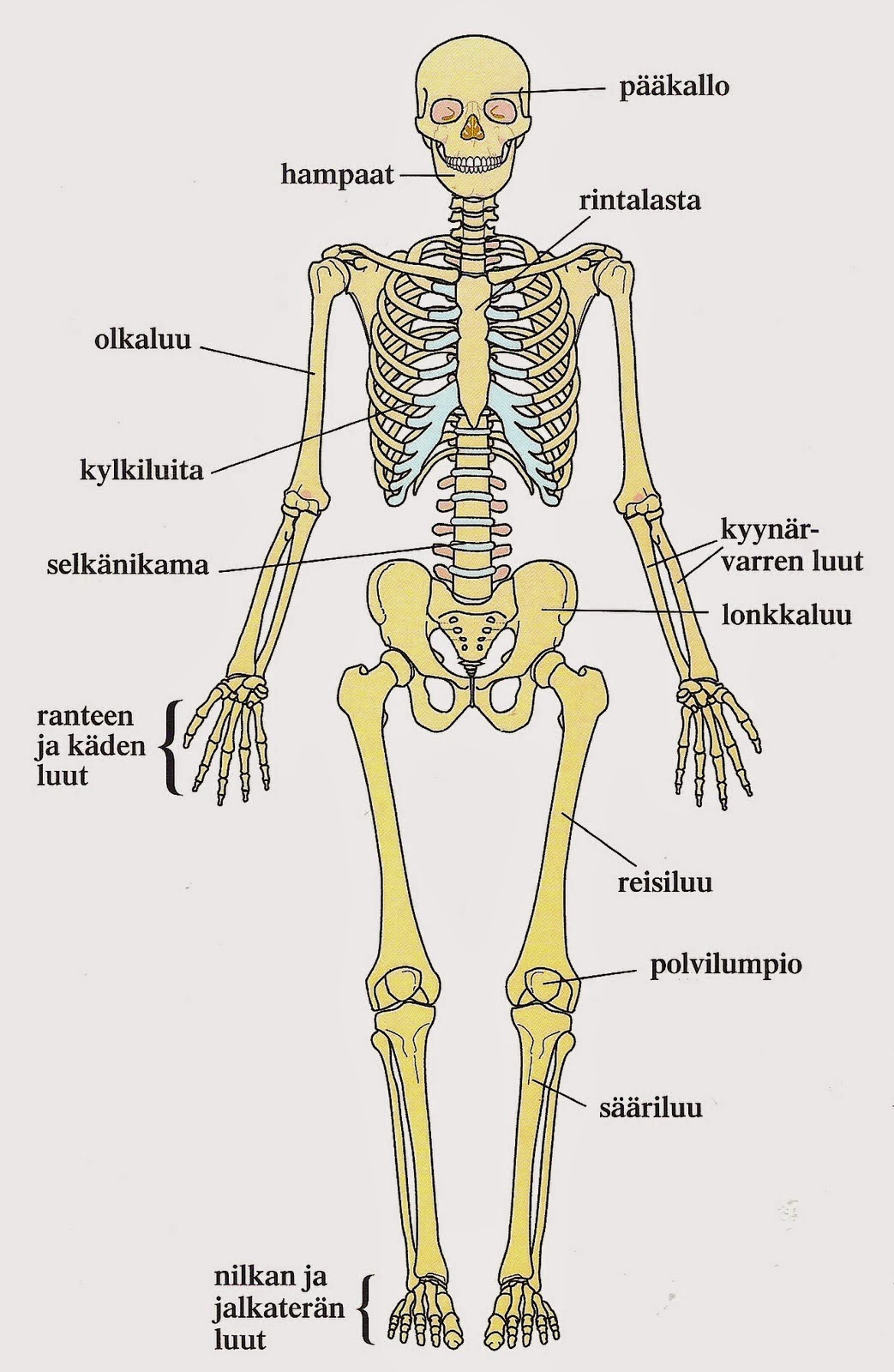 Ihmisen Elimistö