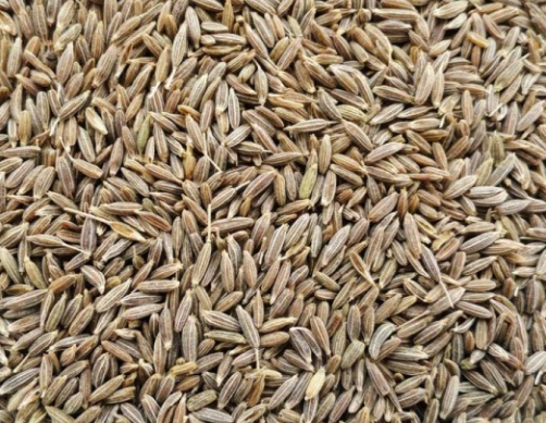Cumin SeedsJeera for the Treatment of Boils