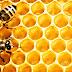 Bal Arıları ile Arıcılık Arasındaki İlişki