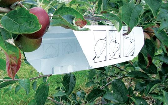 Καστοριά:Γεωργικές Προειδοποιήσεις για μηλιά-αχλαδιά