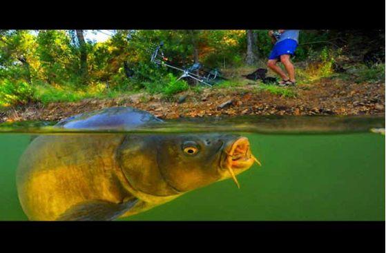 Resep Umpan Putih Ikan Mas