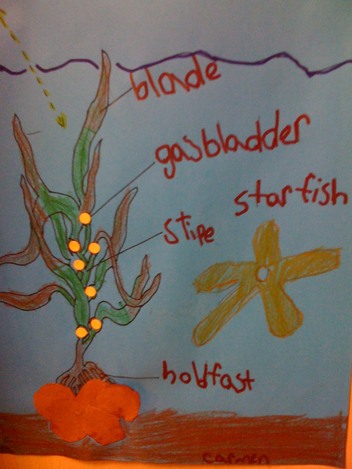 Kelp Forest Diagram Discovery 2 Seat Wiring Bishop 39s Blackboard An Elementary Education Blog