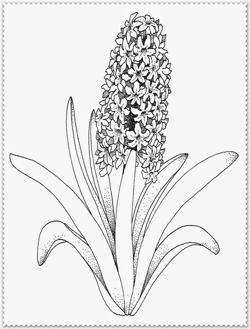 Flowers & vegetation - Coloring Pages for Adults | 1066x810
