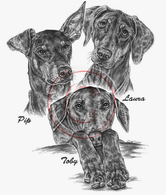 Custom Pet Portrait of 3 Doberman Pinschers by Kelli Swan in Pencil