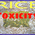 Rice Toxicity: Basic Conception, Risks, Solution