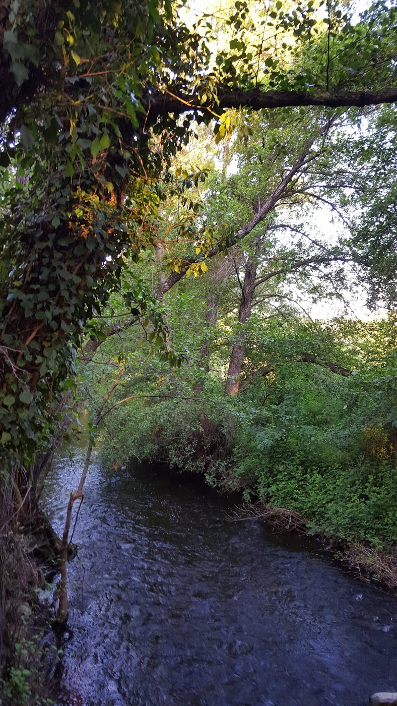 Río Guadalix