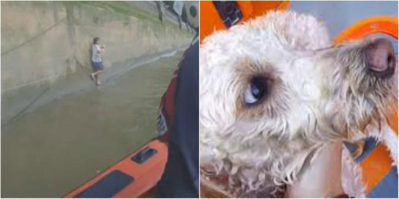 Έκανε βουτιά στον Τάμεση για να σώσει το σκυλάκι του! (βίντεο)