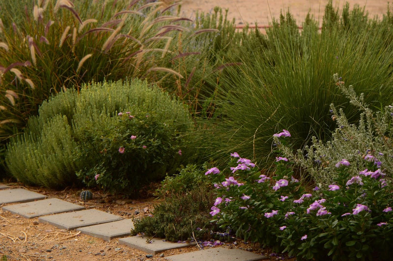 A Small, Sunny Garden: Tuesday View
