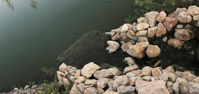 cascada arhitect peisagist gradina proiect gradina amenajare cascada constructie piatra apa fantana lac iaz cu pesti