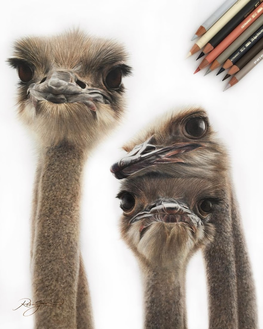 06-Curious Ostriches-Robin-Gan-Realistic-Color-Pencil-Animal-Drawings-www-designstack-co