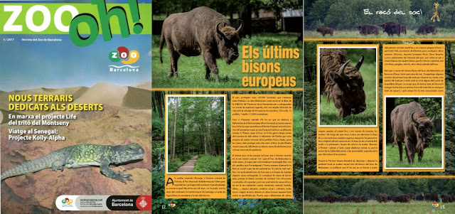 Reportatge bisons Zoo Oh!