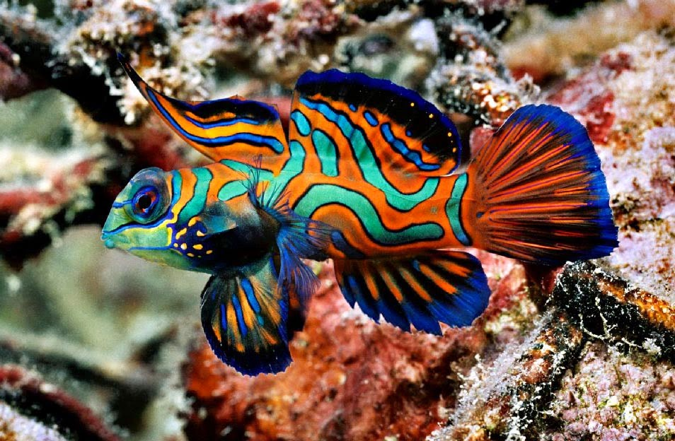 Jenis Ikan Hias yang Paling Bagus untuk Dipelihara